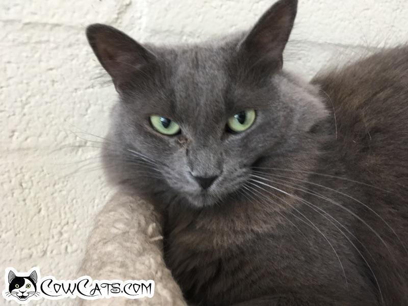Adopt a Cat - Marie from Scottsdale Arizona