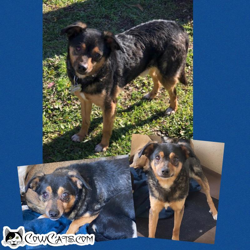 Adopt a Dog - Colorado from Scottsdale Arizona