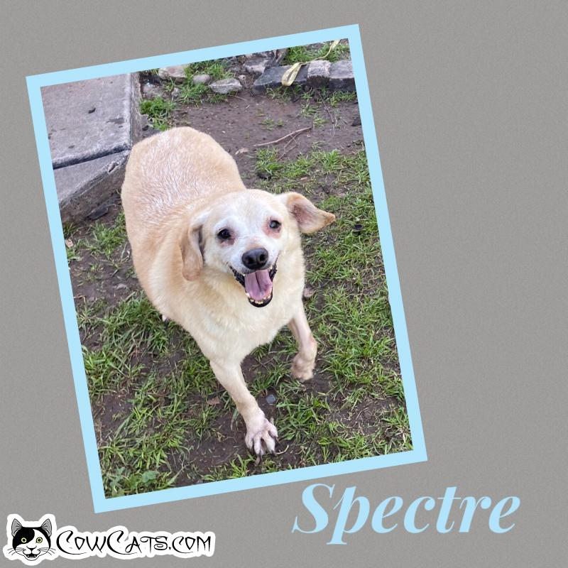 Adopt a Dog - Spectre from Scottsdale Arizona