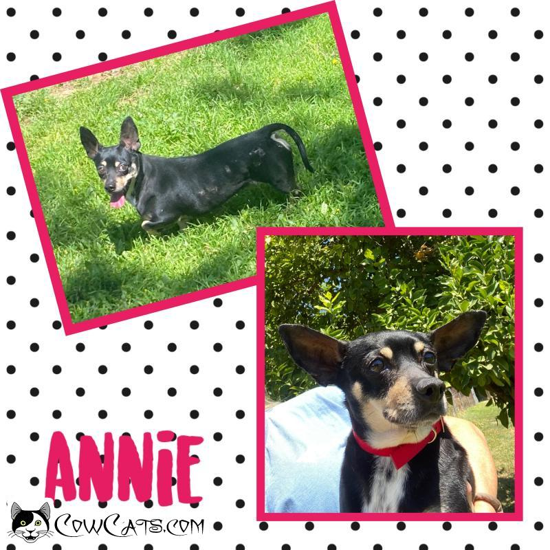 Adopt a Dog - Annie from Scottsdale Arizona