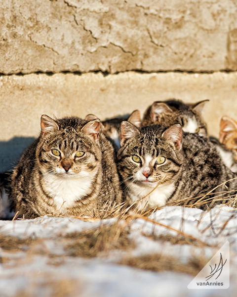 Stray Cats Try to Stay Warm